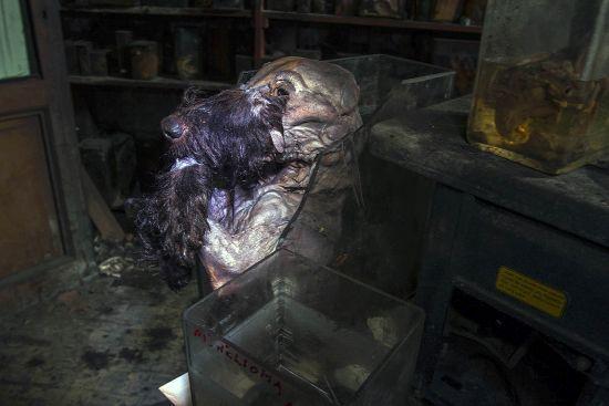 https://eosfoto.nl/images/extern/Horror_Labs_urbex_foto_07.jpg